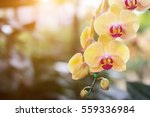 Orchid Flower In The Garden At...