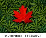 canadian marijuana concept and... | Shutterstock . vector #559360924