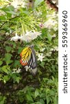 butterfly and flowers.  | Shutterstock . vector #559366960