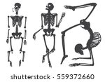 human skeleton. black on white. ... | Shutterstock .eps vector #559372660