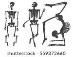Human Skeleton. Black On White...