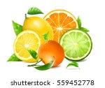 fresh citrus with leaves.... | Shutterstock .eps vector #559452778