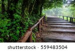 Wooden Stairs Among Green...