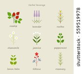 herb healing leaf grass nature... | Shutterstock .eps vector #559519978