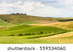 Cultivated Fields And Vineyard...