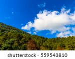 forest trees and blue sky   Shutterstock . vector #559543810