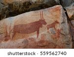 rock art   tsodilo hills | Shutterstock . vector #559562740