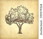 hand drawn vector illustration... | Shutterstock .eps vector #559579318