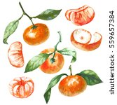 watercolor set tangerine... | Shutterstock . vector #559657384