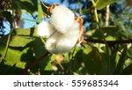 flowers in the garden | Shutterstock . vector #559685344