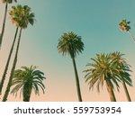 palm trees in santa monica  los ... | Shutterstock . vector #559753954