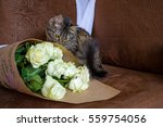 photo by striped cat sniffing...   Shutterstock . vector #559754056