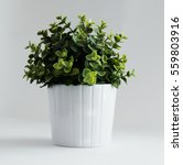 potted plant | Shutterstock . vector #559803916