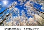 winter wonderland with snow... | Shutterstock . vector #559826944