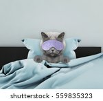 Stock photo adorable sleeping cat laying in a bed 559835323
