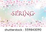 blooming cherry. spring... | Shutterstock .eps vector #559843090