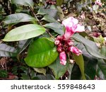 closeup of pink flowers and... | Shutterstock . vector #559848643