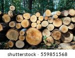 A Pile Of Cut Tree Trunks In A...