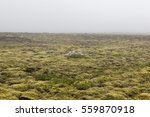Iceland Thick Moss Field With...