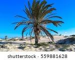 ras el rmal island of djerba.... | Shutterstock . vector #559881628