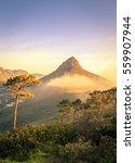 lions head mountain in cape... | Shutterstock . vector #559907944