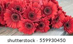 Red Gerbera Flowers.