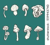 set of hand drawn vector... | Shutterstock .eps vector #559943740