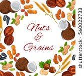 nuts and grain of seeds ... | Shutterstock .eps vector #560022733