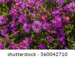Purple Wild Flowers. New...