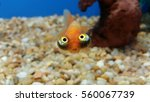 Hilarious fish face expression  ...