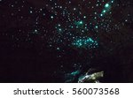 Waitomo Glowworm Caves  New...