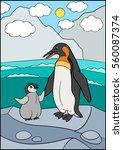 cartoon birds. mother penguin... | Shutterstock .eps vector #560087374