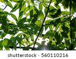 Green Leaf On Light