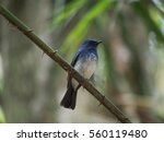 bird on a branch | Shutterstock . vector #560119480