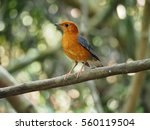 bird on a branch | Shutterstock . vector #560119504