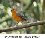 bird on a branch | Shutterstock . vector #560119534