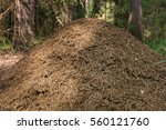 Closeup Of Large Anthill In Th...