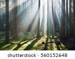 sun rays in a fog in a misty... | Shutterstock . vector #560152648
