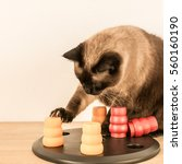 Small photo of Clever and assiduous cat playing with pet puzzle - square.