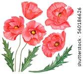 watercolor set of poppy flowers ... | Shutterstock . vector #560186626