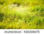 abstract natural background... | Shutterstock . vector #560208670