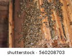 bees in the combs in an open... | Shutterstock . vector #560208703