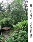 Small photo of Botanical garden in tropical rainforest. Alcove between exotic palms and high bamboo.