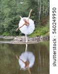 Ballerina On Swan Lake