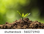 plant coffee seedlings in nature | Shutterstock . vector #560271943