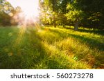 sunset or sunrise in forest... | Shutterstock . vector #560273278