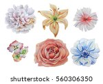 set with flowers. rose.... | Shutterstock . vector #560306350
