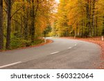 road in the autumnal forest in... | Shutterstock . vector #560322064
