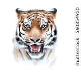 tiger face on white background | Shutterstock . vector #560354920