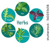 poster of different fresh herbs ... | Shutterstock .eps vector #560355658